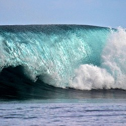 Surf the Maldives!